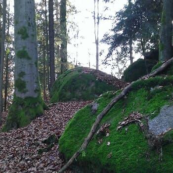 Niedermayer-Gedächtnis-Weg