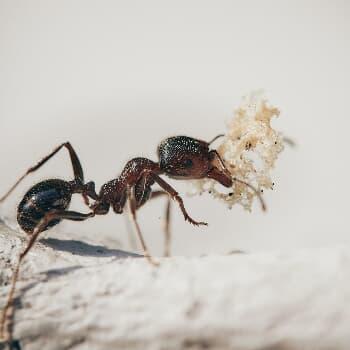 Insekten-Runde
