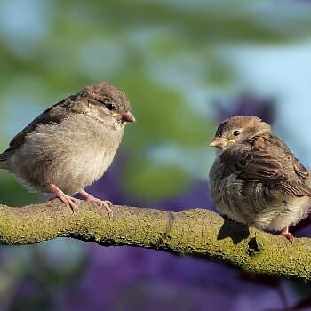 Vogel-Runde