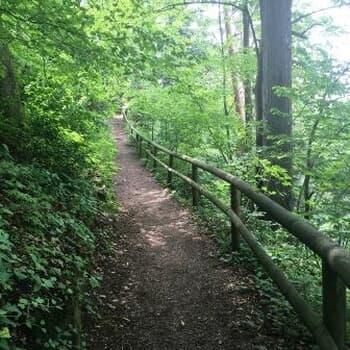 Rundwanderweg Oberilzmühle - Triftsperre - Oberilzmühle