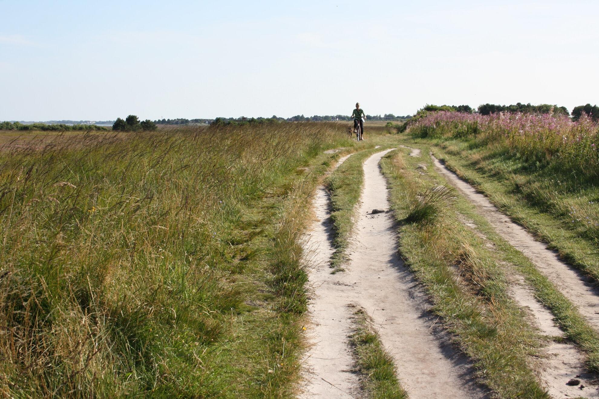 Fahrradweg in der Braderuper Heide