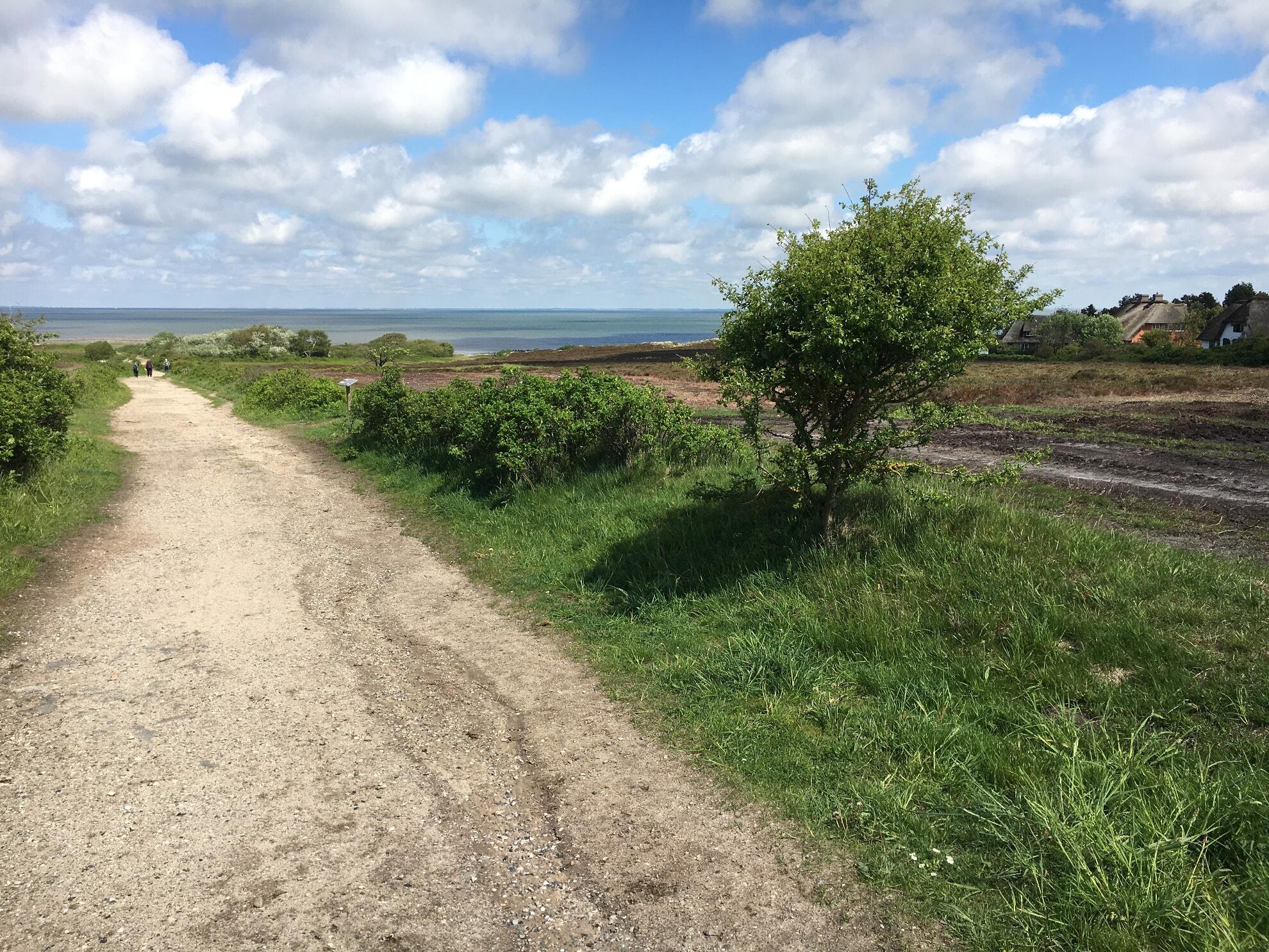 Braderuper Heide