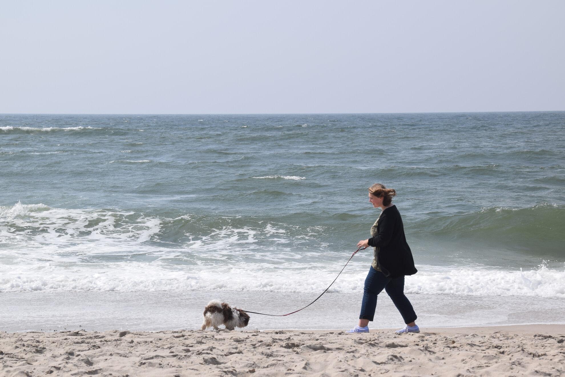 Am Strand gibt es viel zu erleben für Ihren Vierbeiner