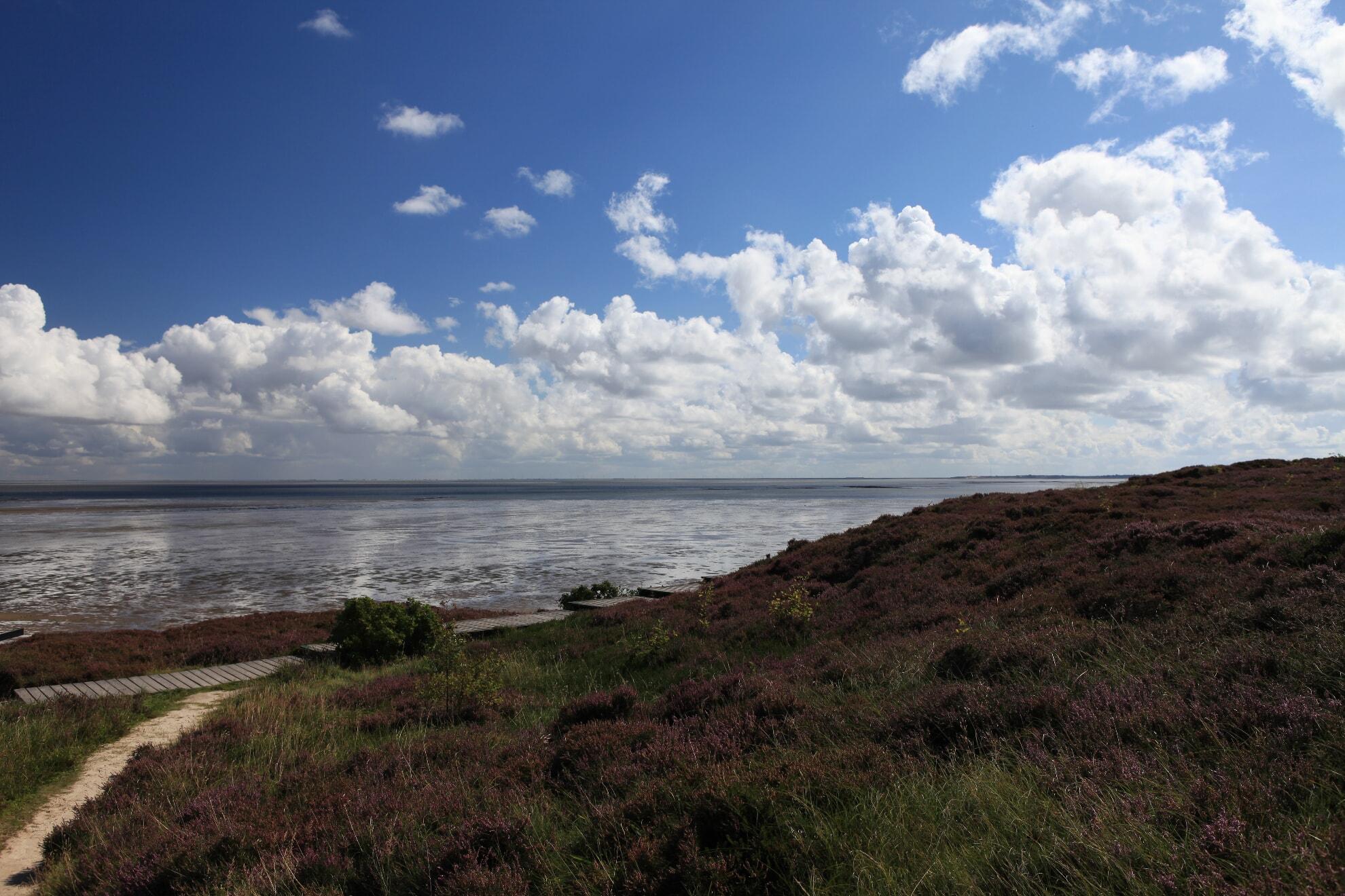Heidelandschaft Wattenmeer