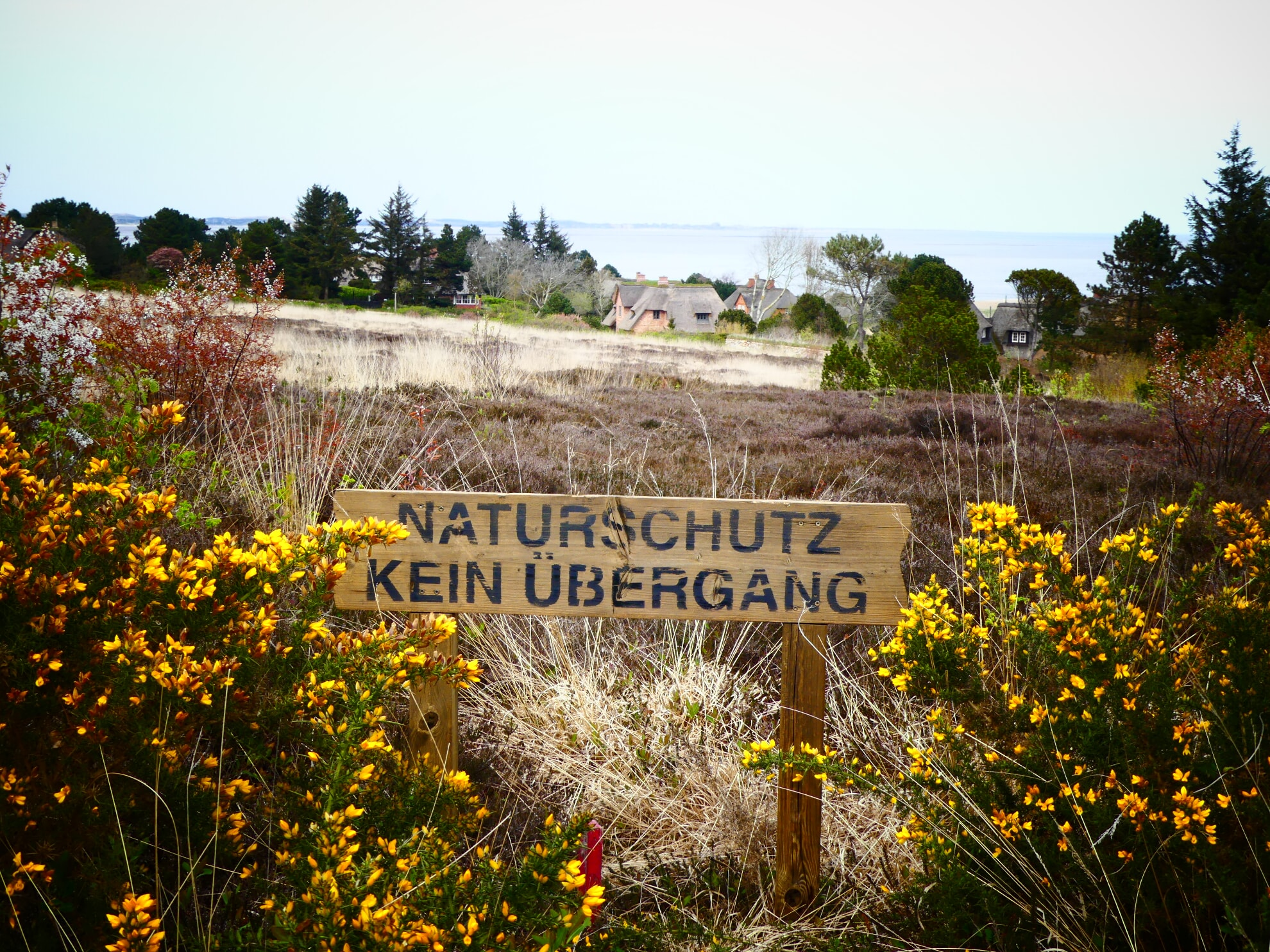 Naturschutzgebiet Braderuper Heide