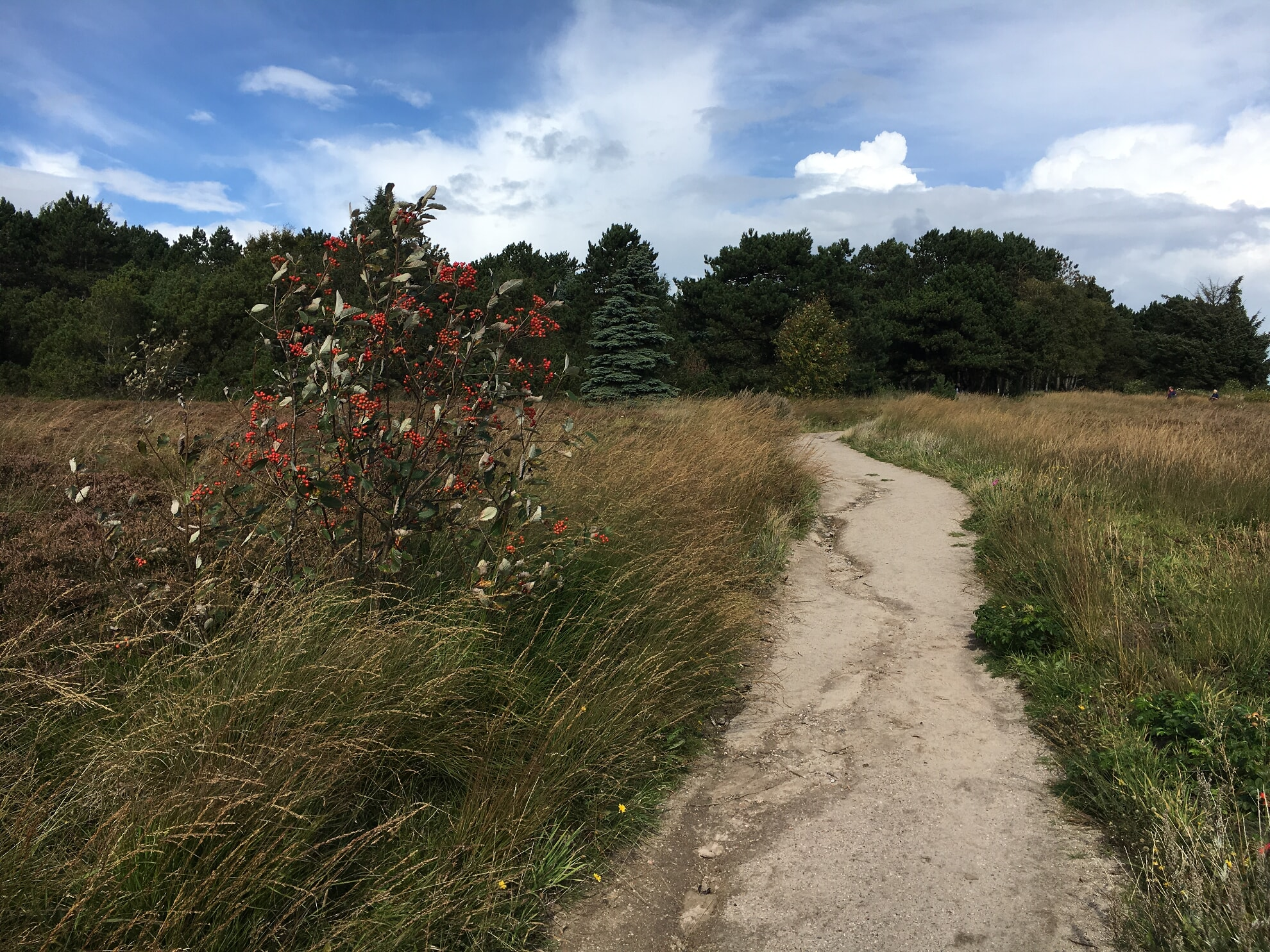 Weg zur Kupferkanne von der Braderuper Heide