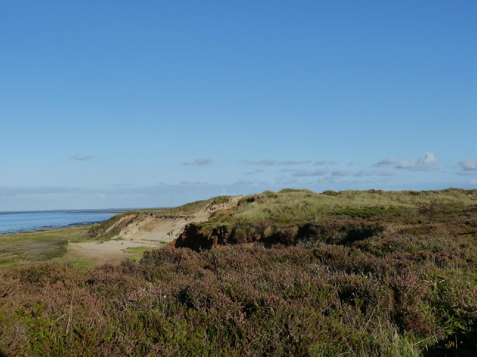 Das Morsum Kliff mit Heide