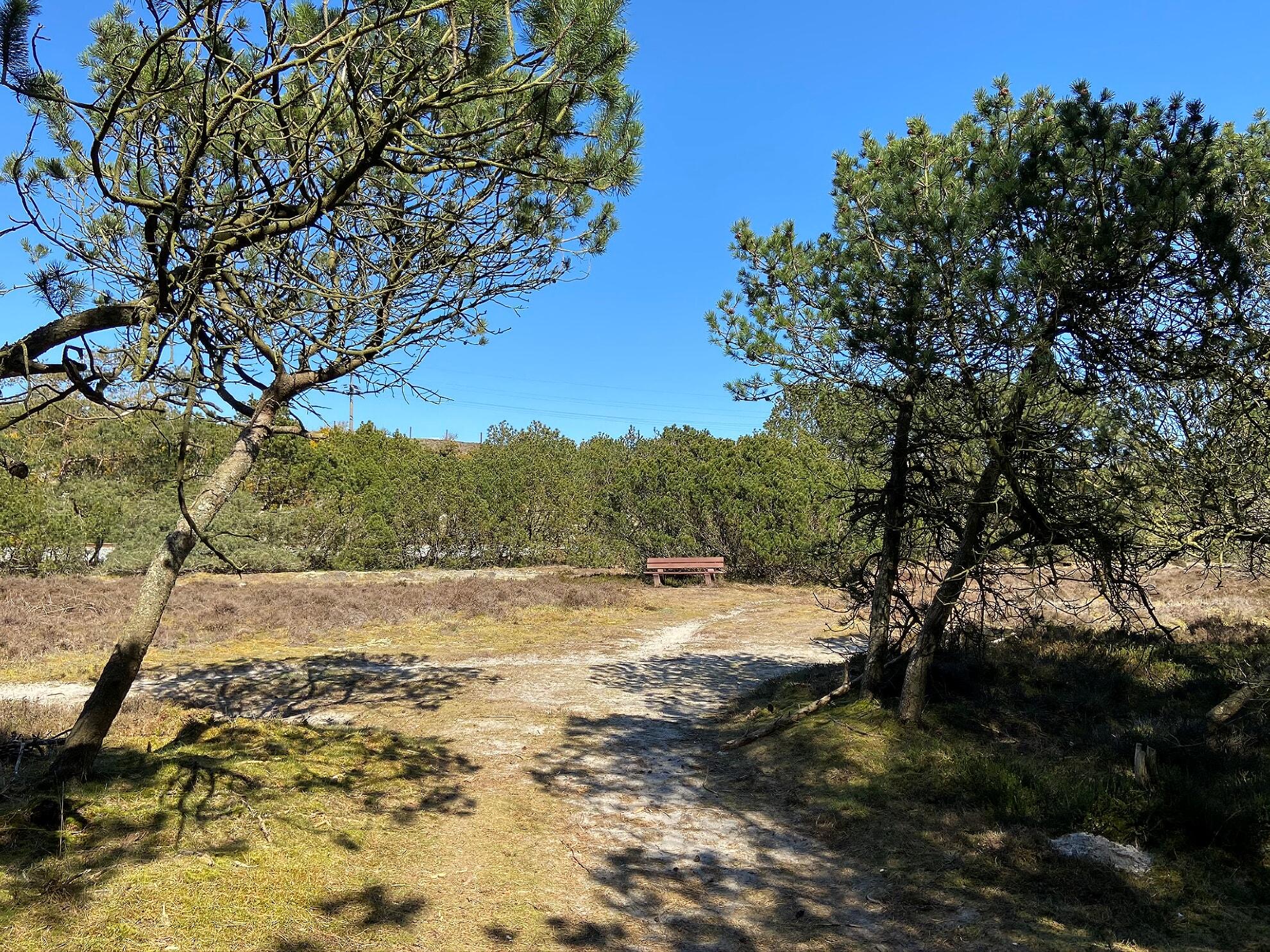 Heideflächen am Morsumer Wäldchen
