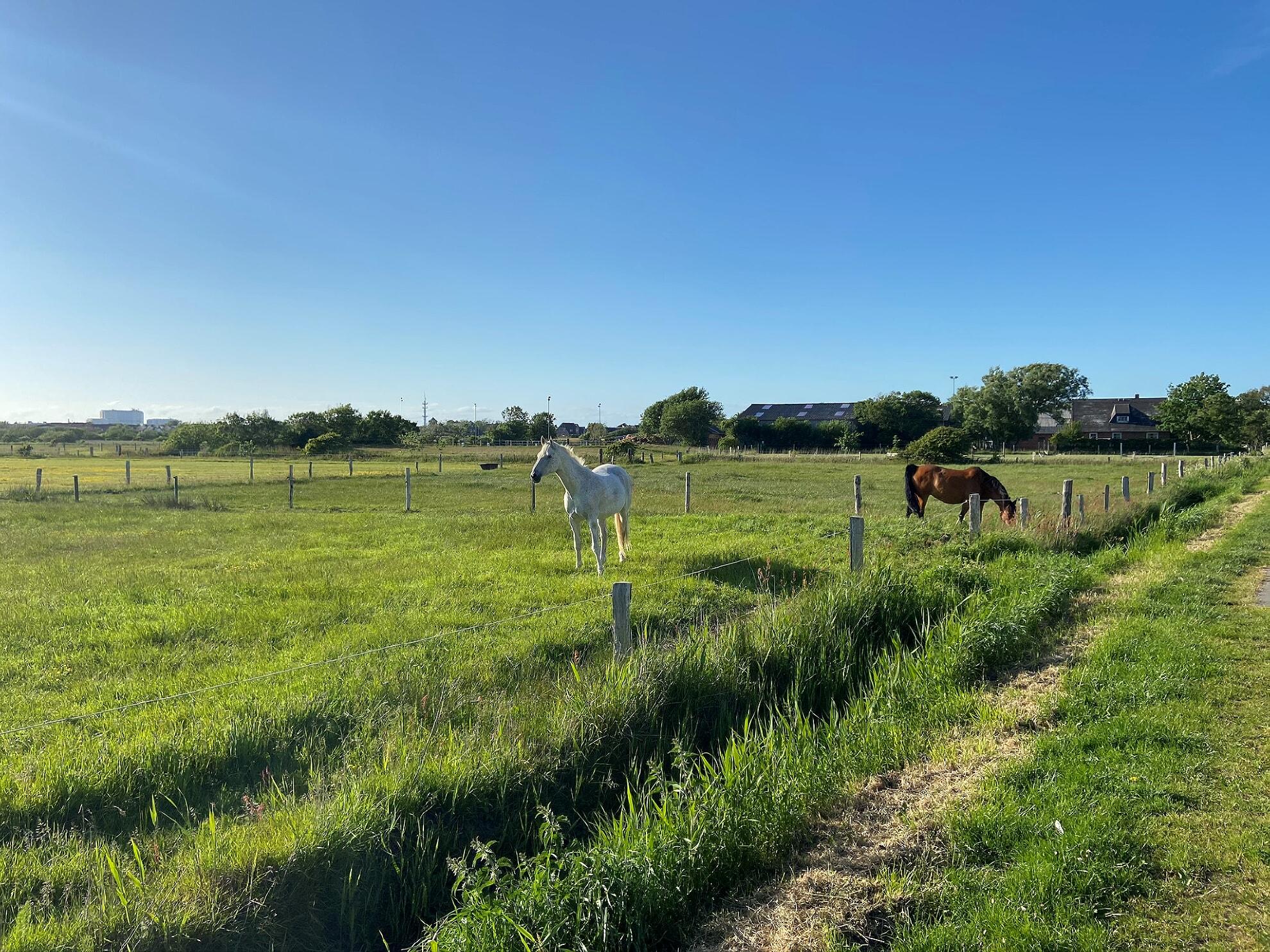 Pferdehof Sylt