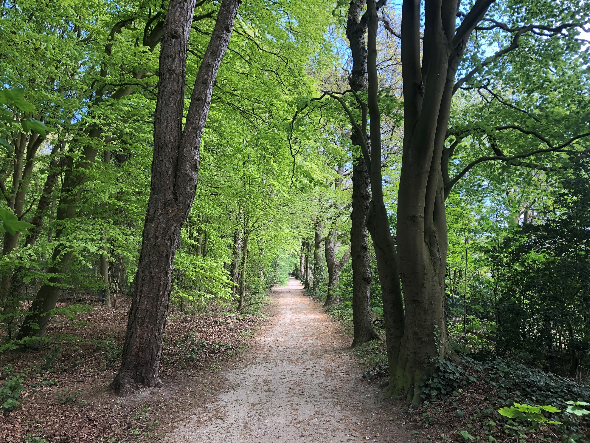 Waldweg im Friedrichshain