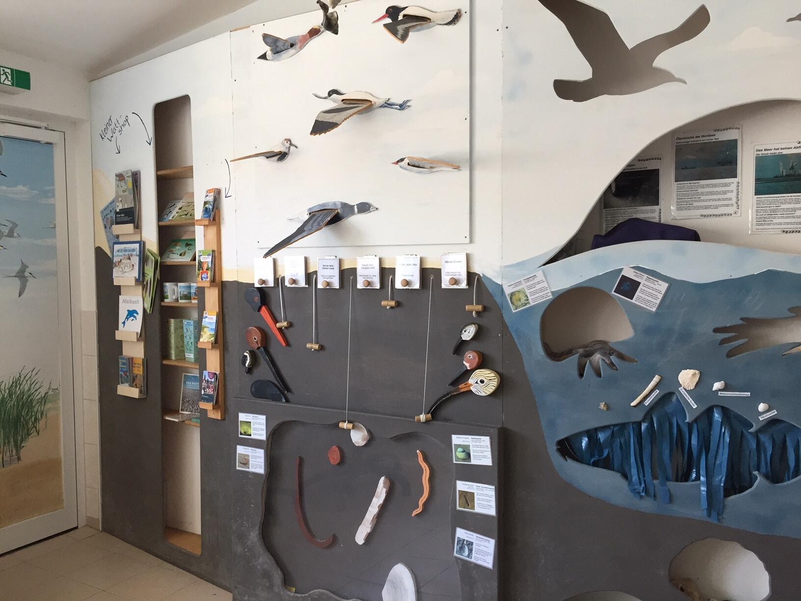 Austernfischer Puan Klent Schutzstation Wattenmeer