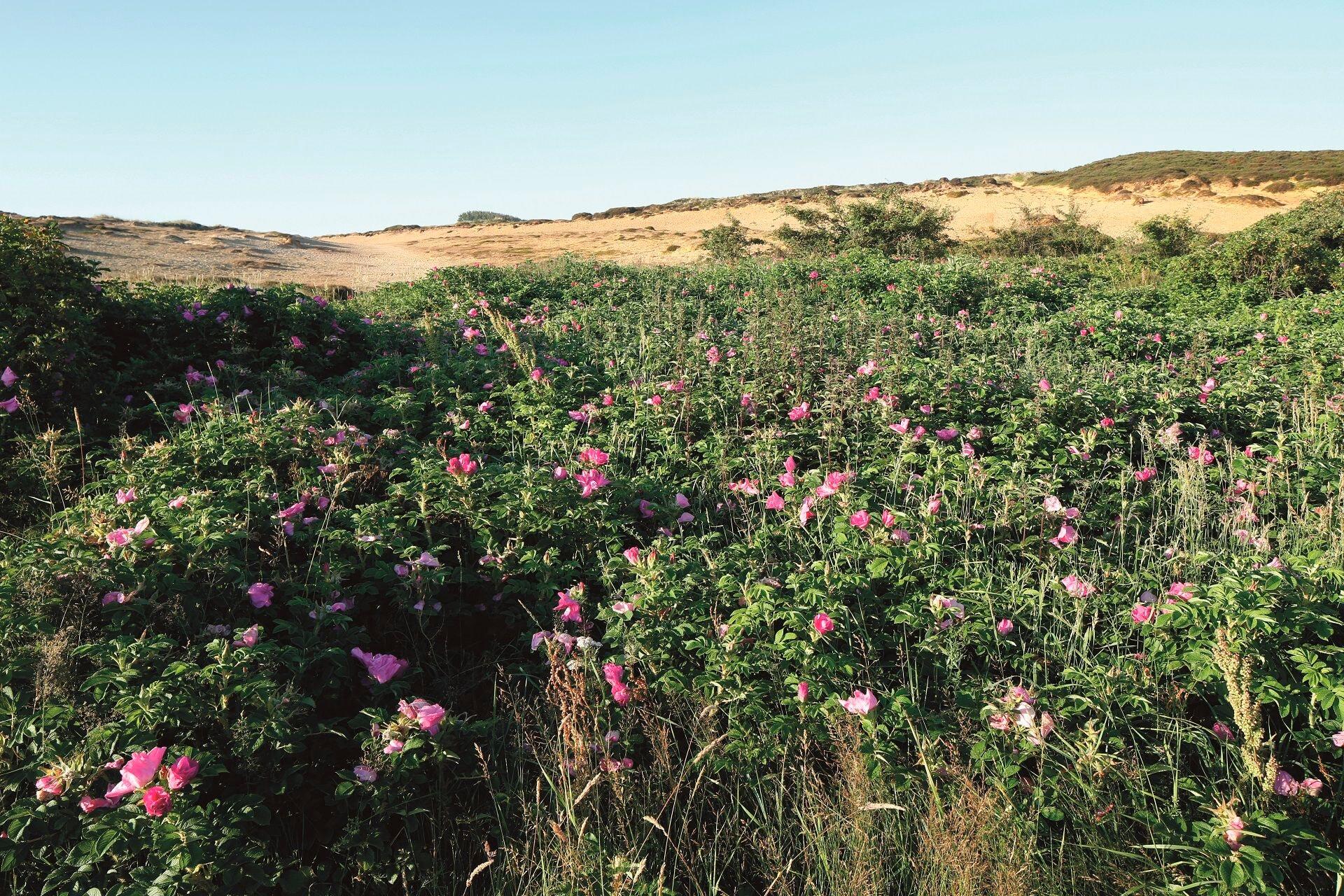 Morsum-Kliff Natur