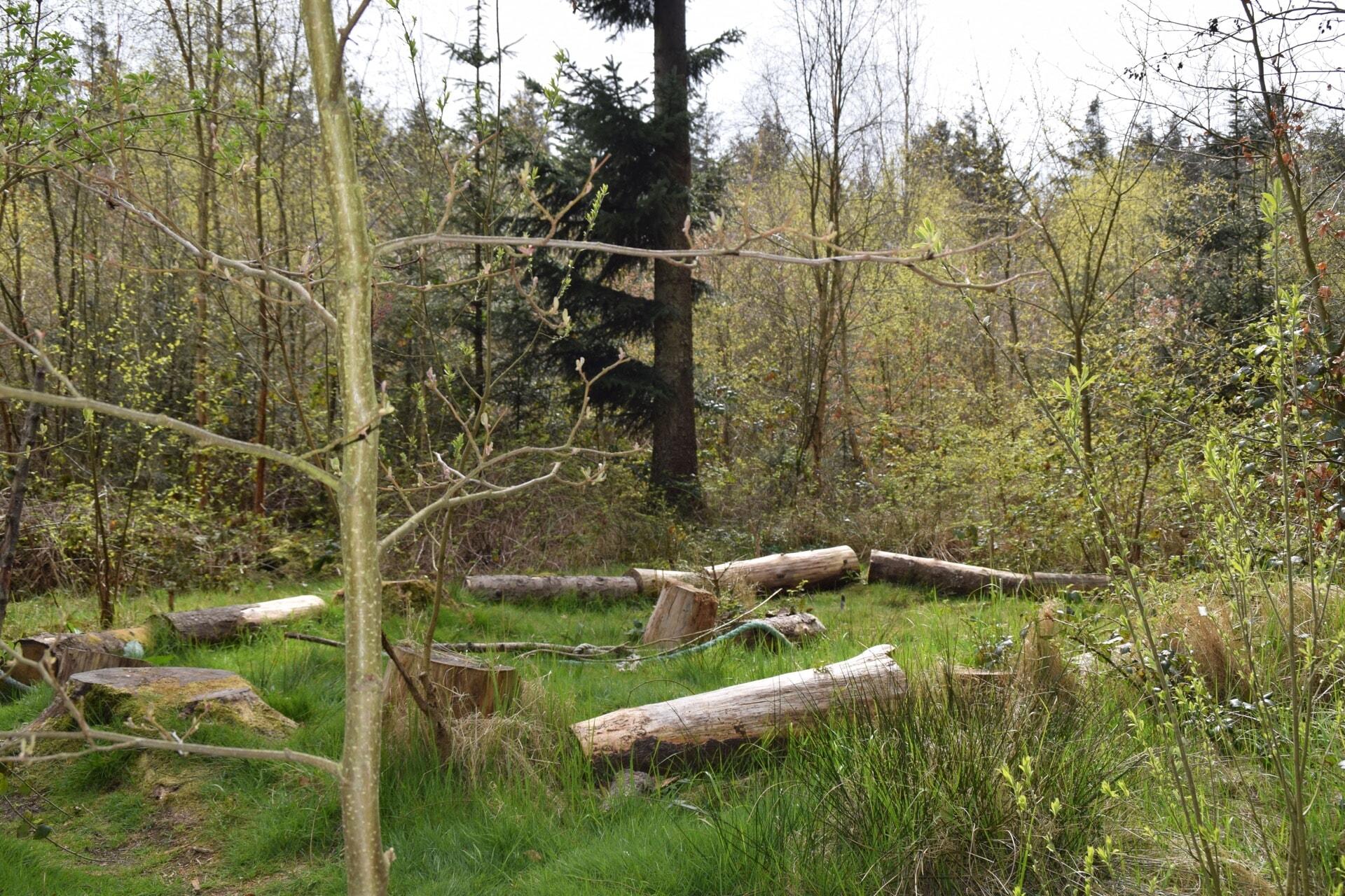 Sitzgelegenheiten im Wald