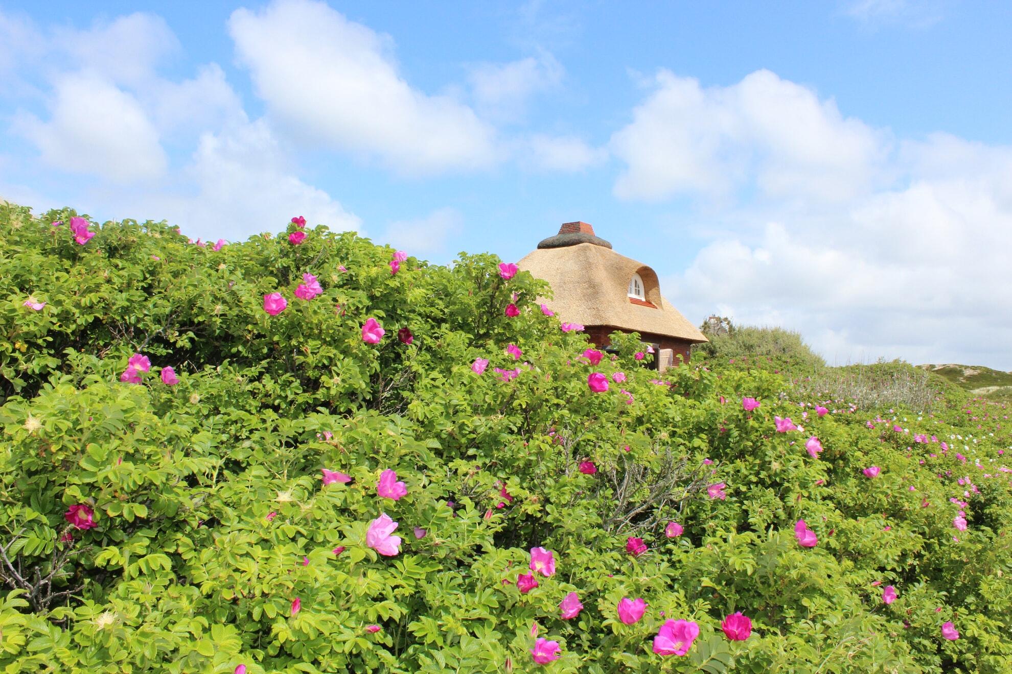 Haus in der Kersig-Siedlung