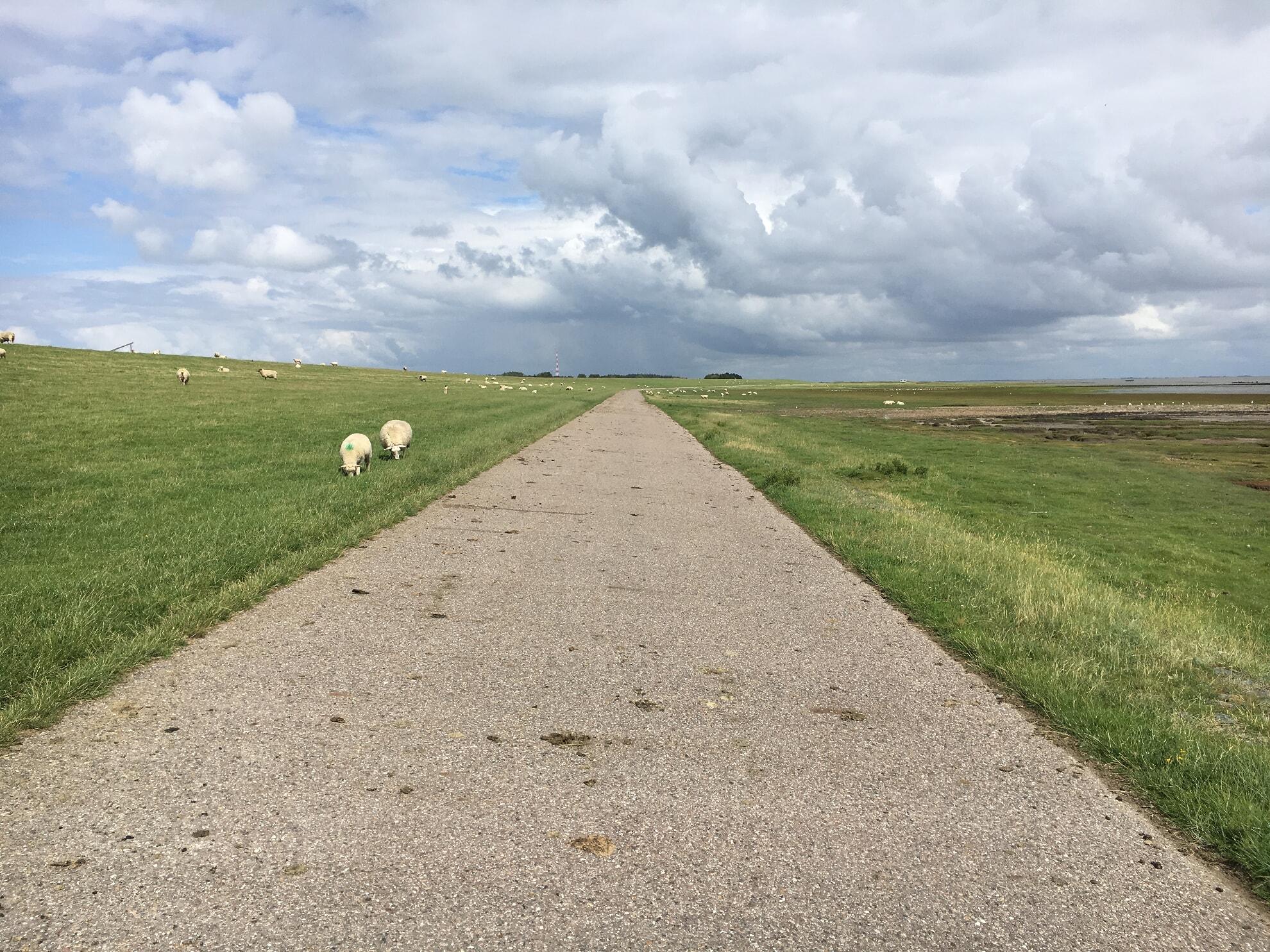 Deichweg in Morsum