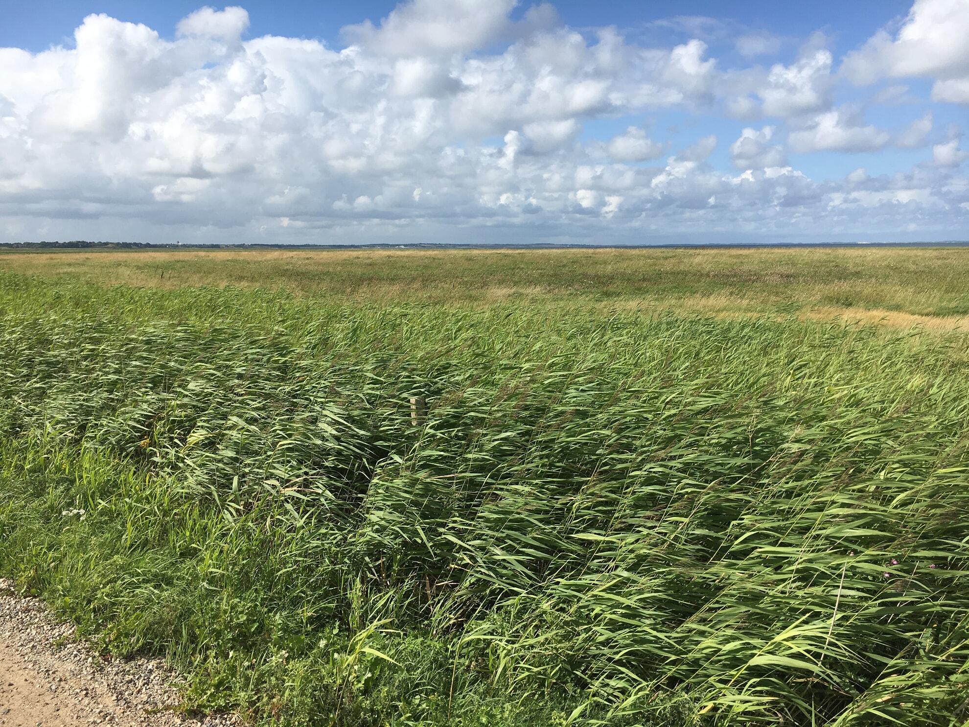 Wiesen westlich von Morsum