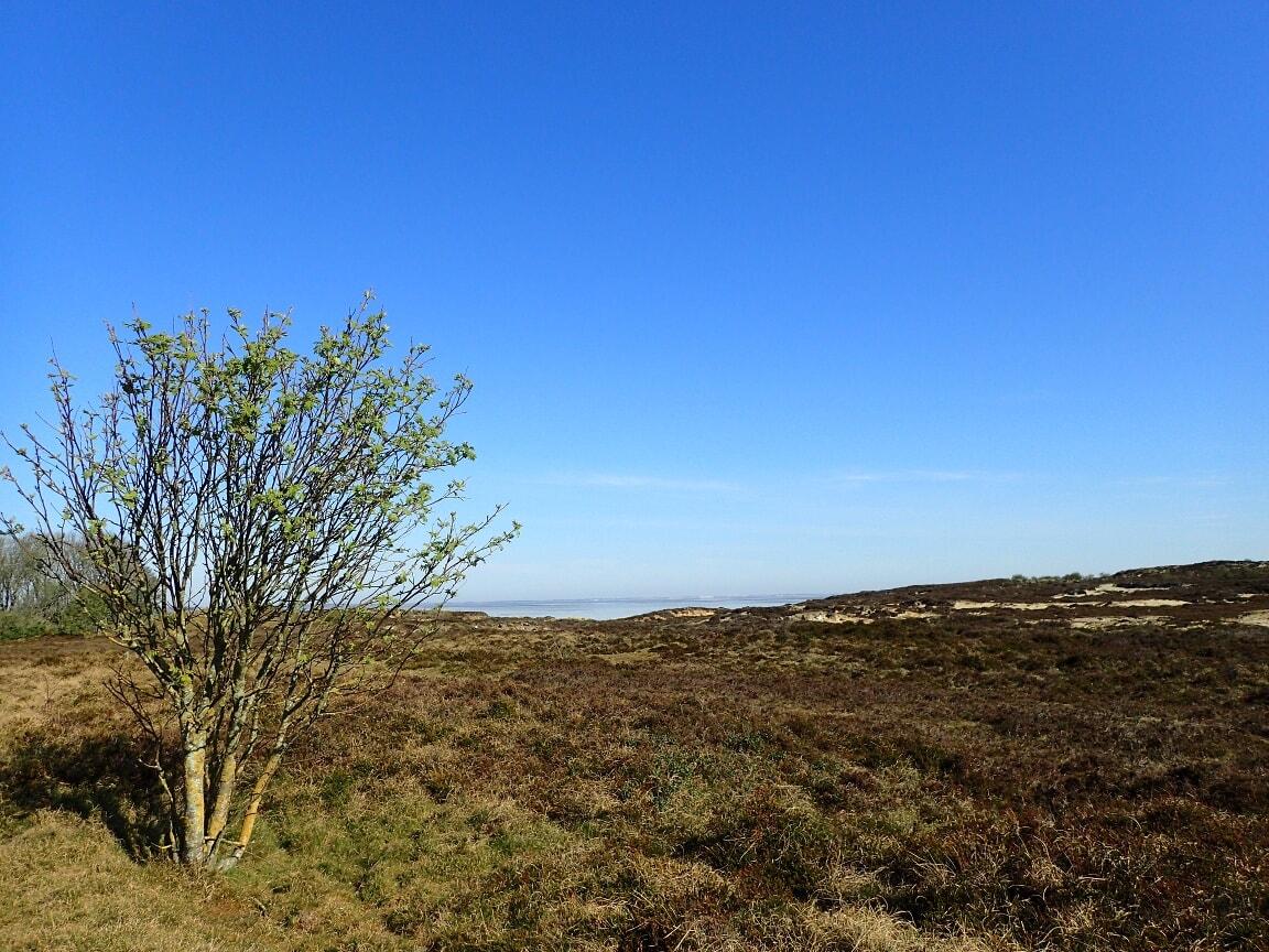 Oberhalb des Kliffs erstreckt sich eine Heidelandschaft.