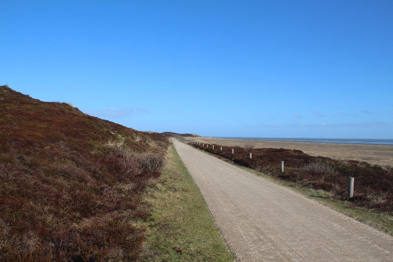 An der Ostseite bilden Salzwiesen den Übergang zwischen Dünen und Watt.