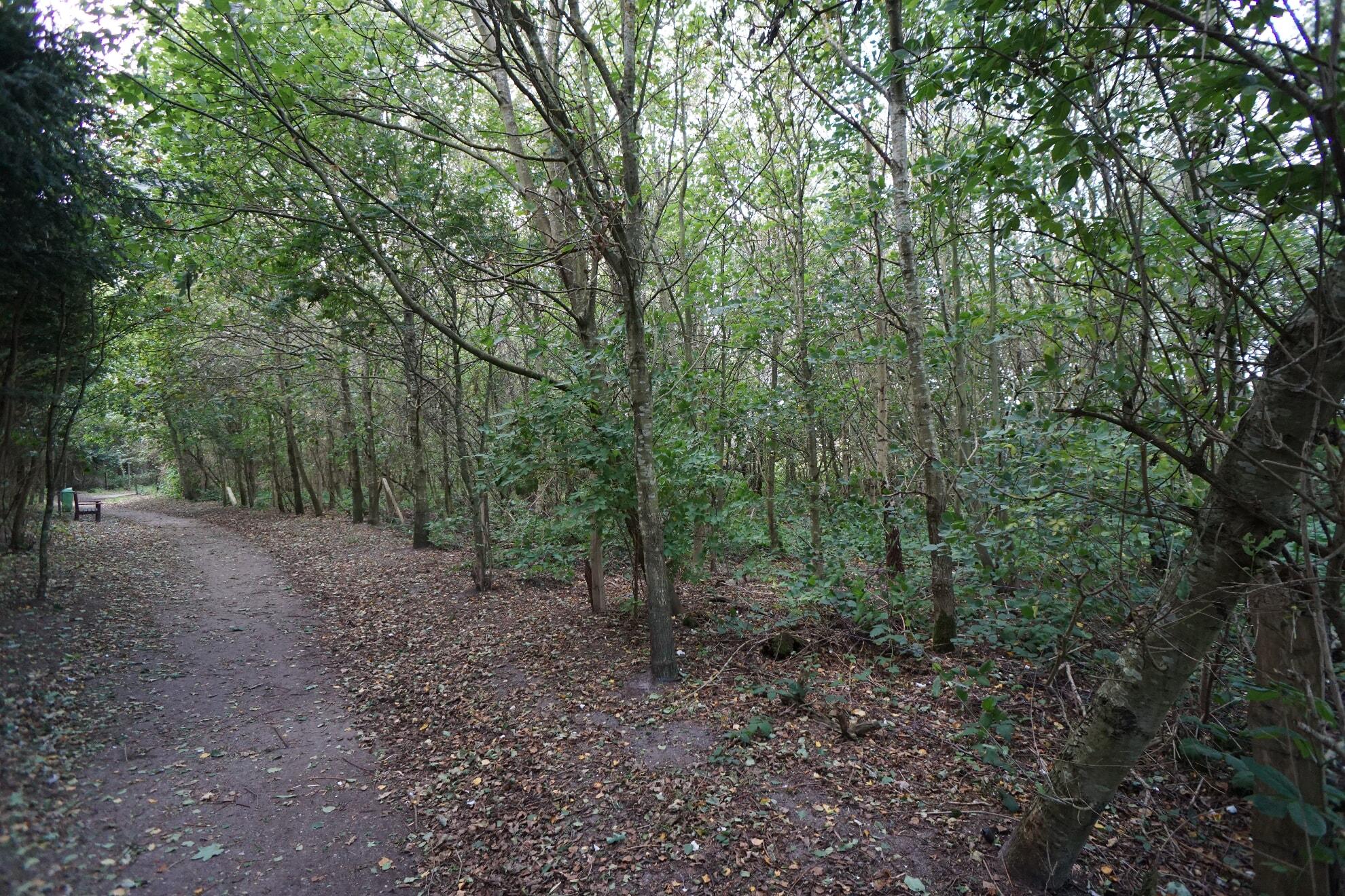 Wald am Campingplatz in Kampen