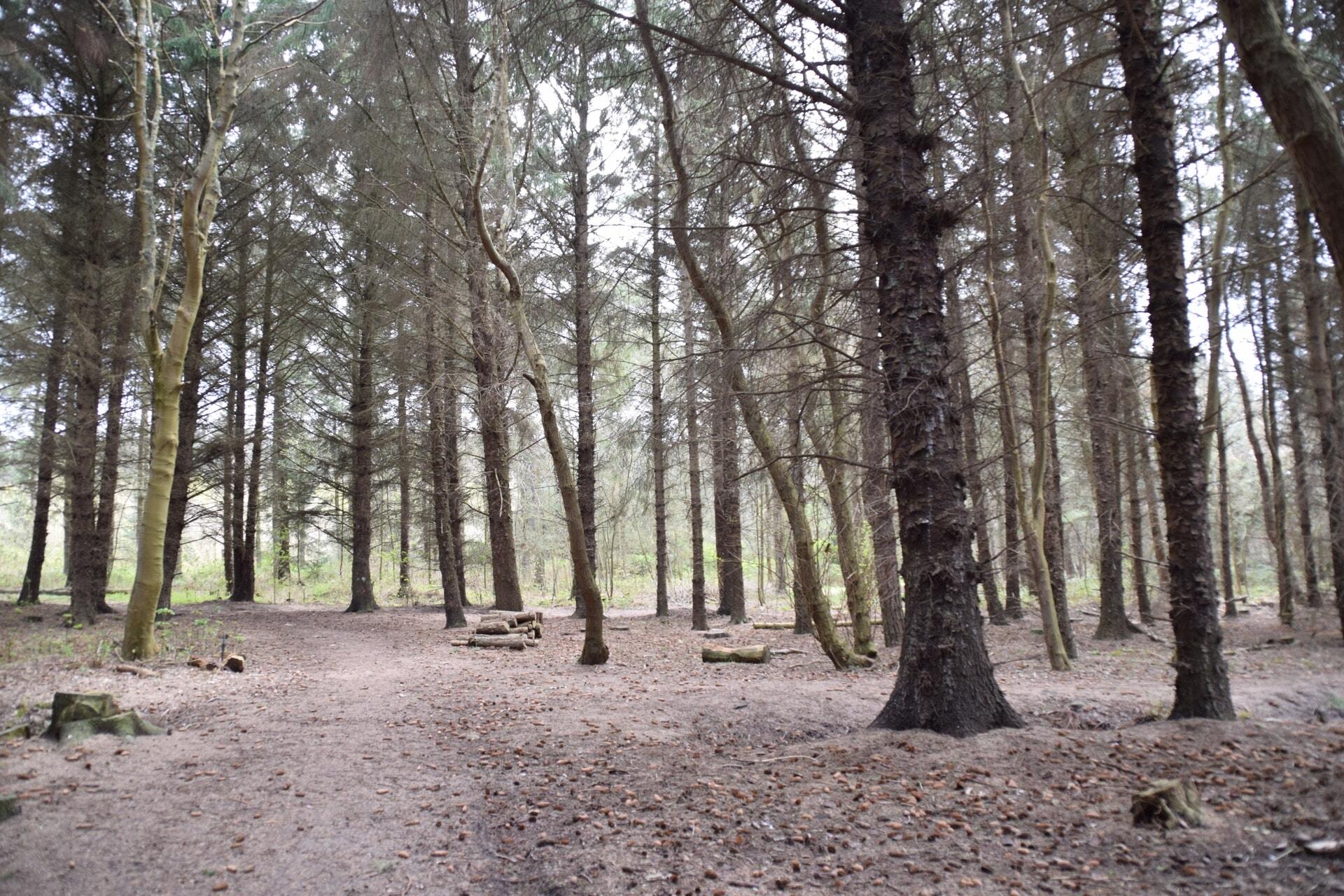 Wald bei Remondis