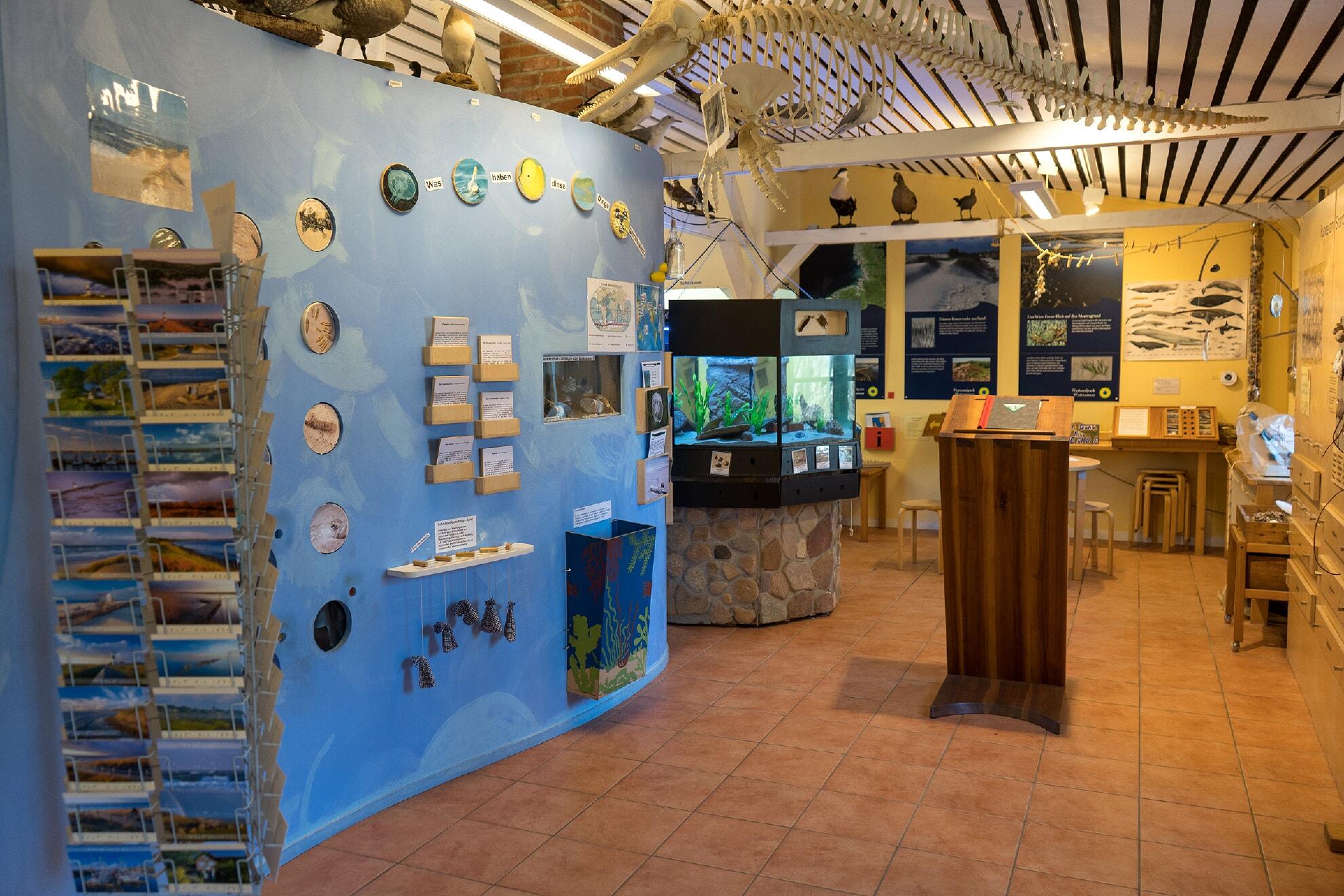 Ausstellung Naturzentrum Braderup