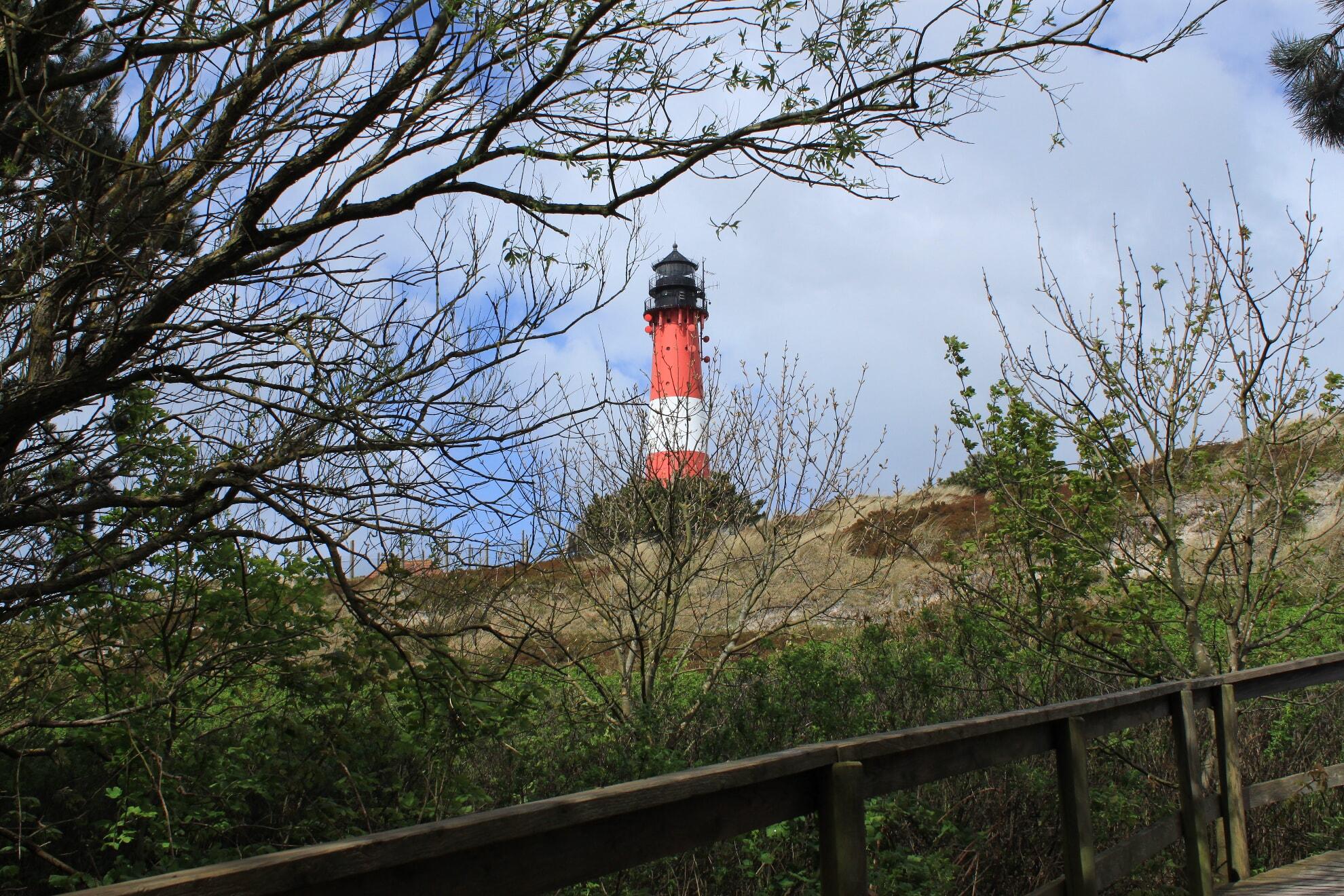 Blick auf den Hörnumer Leuchtturm vom Wäldchen