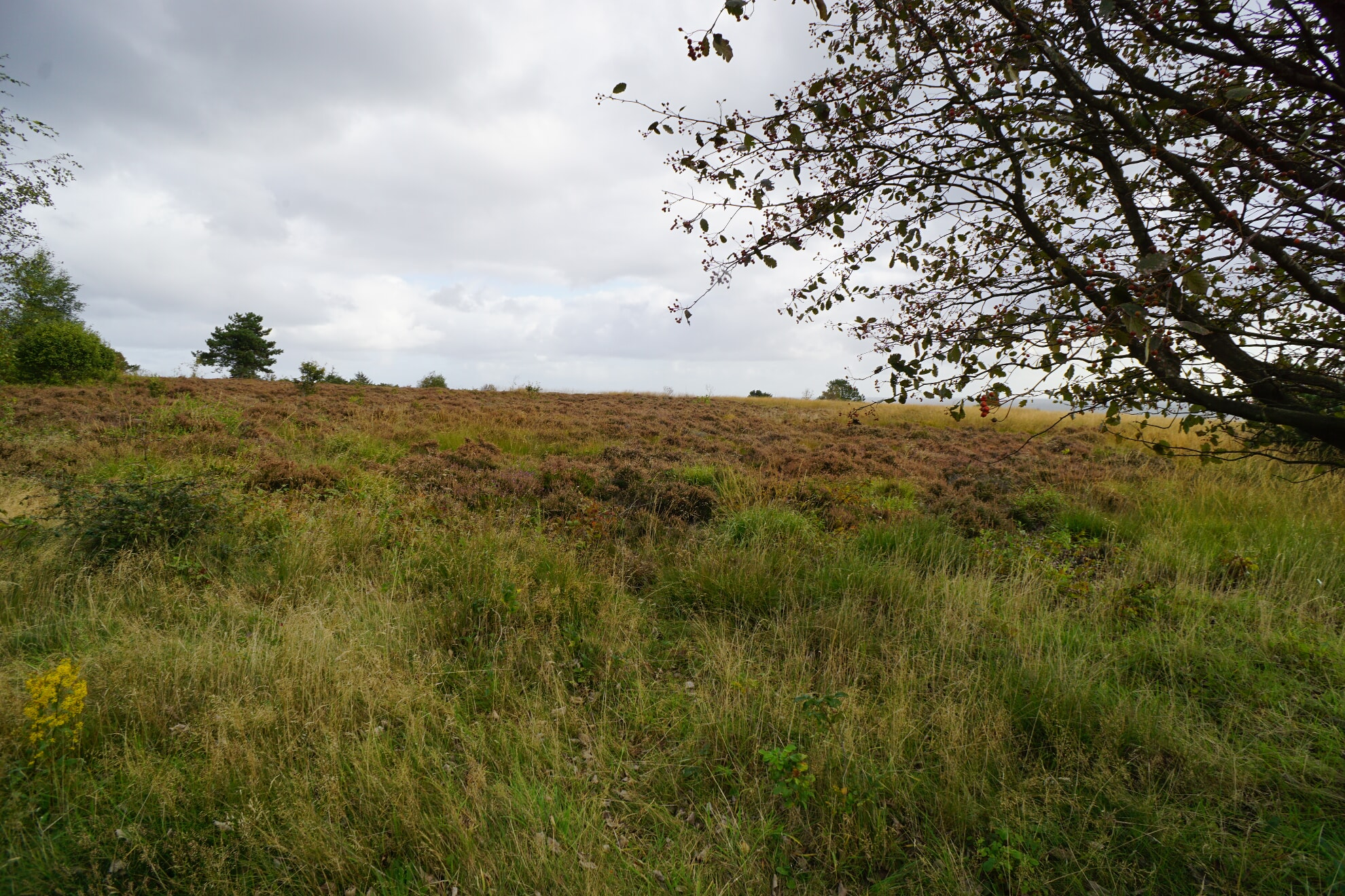 Braderuper Heide in Kampen