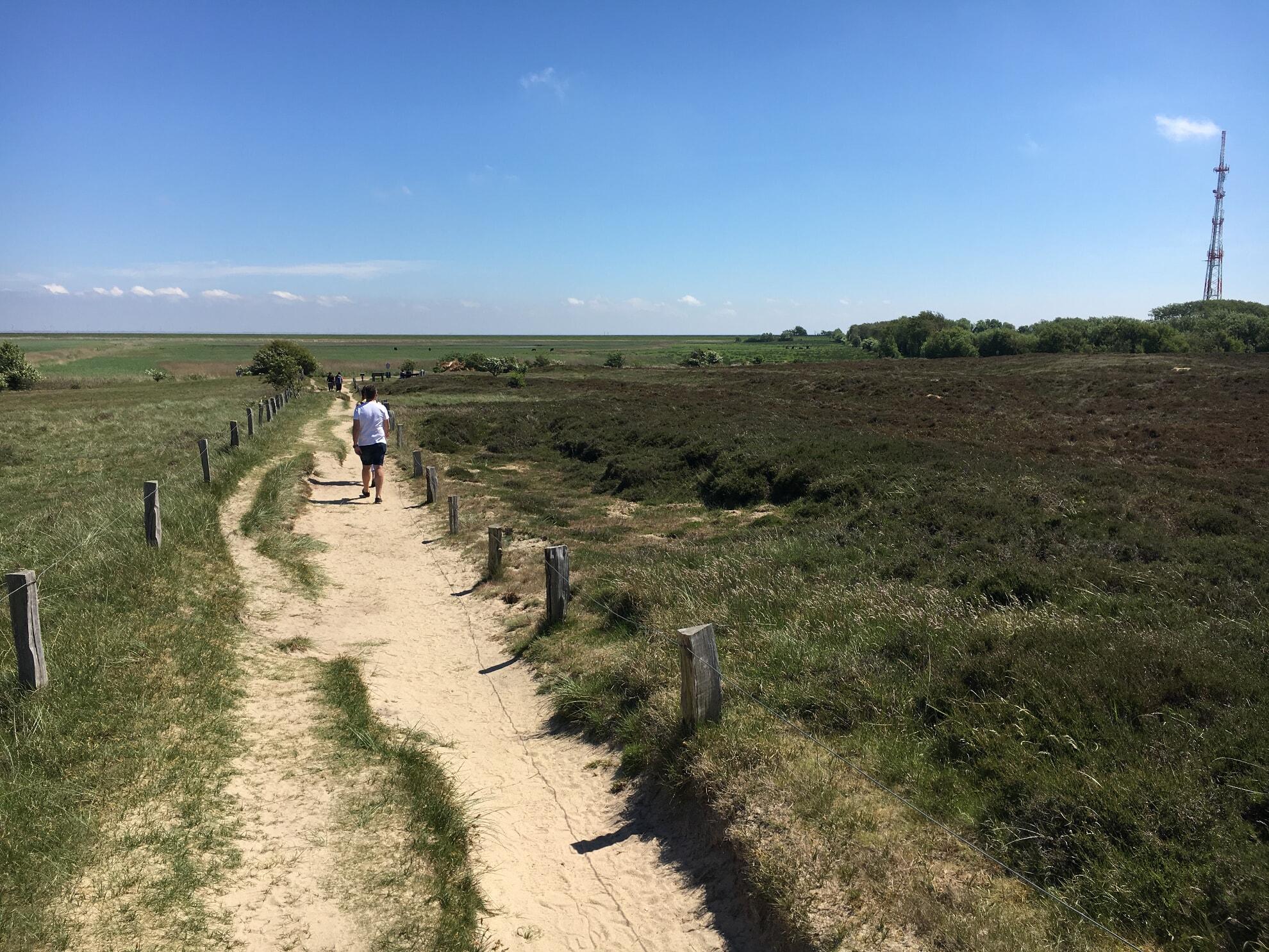 Die Heide am Morsum Kliff