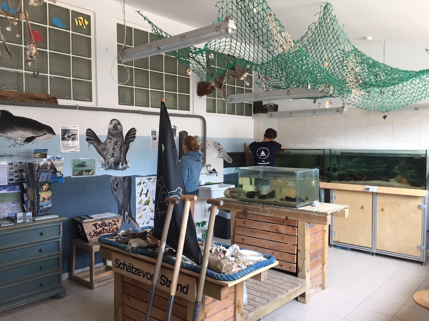 Wattlabor Austernfischer