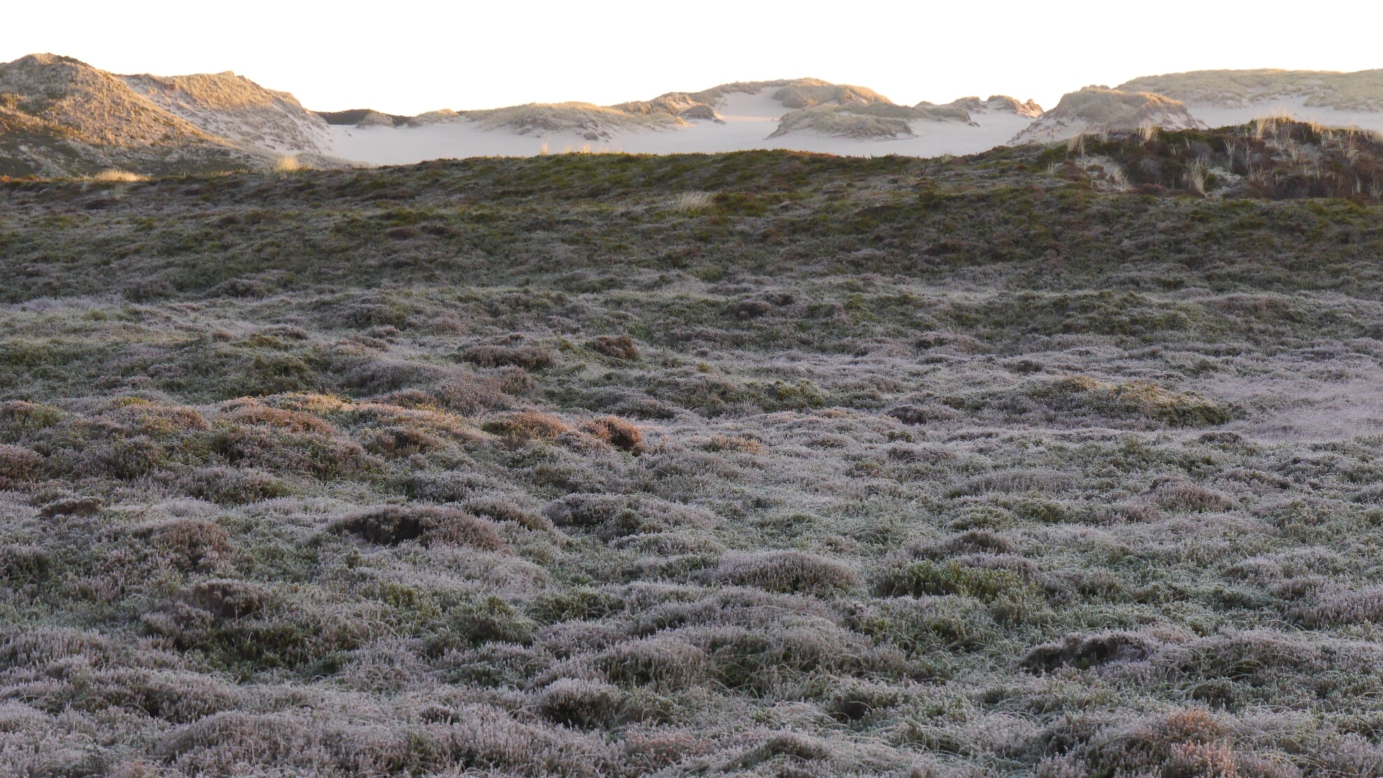 Wanderdünen mit winterlichem Rauhreif