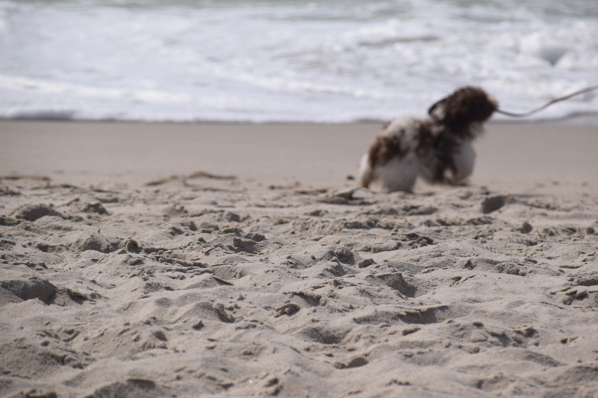 Hund am Hundestrand