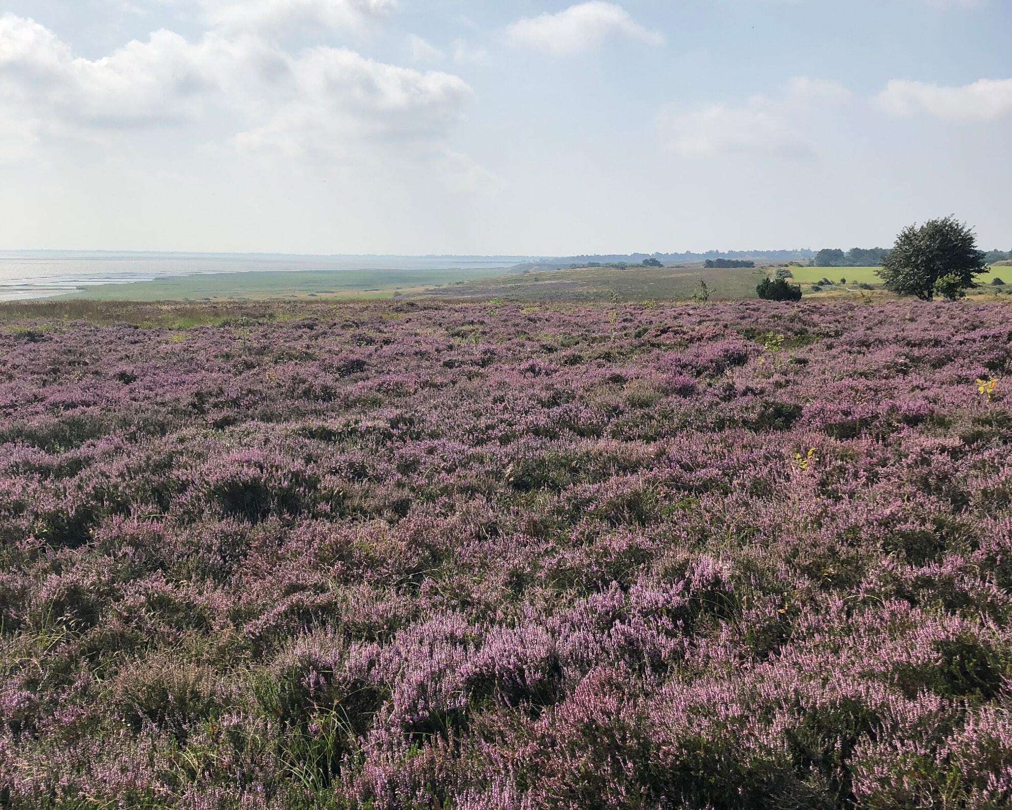 Blick auf die Braderuper Heide in Kampen